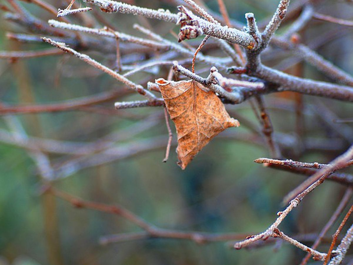 The Next Big Thing: Chilly through most of November?