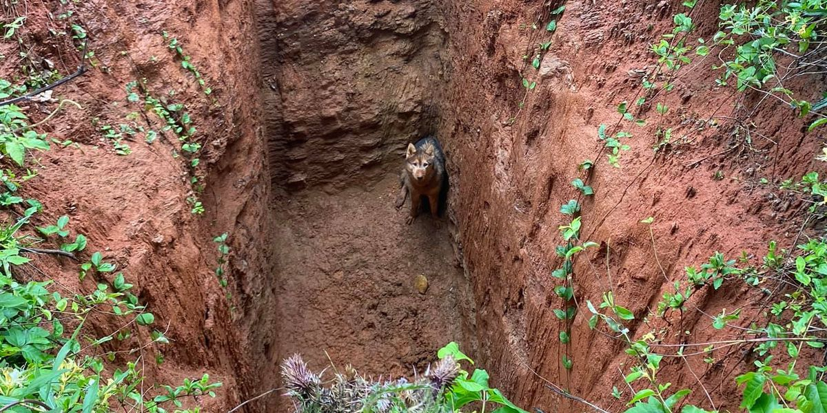 Fire crew rescues dog found in deep hole