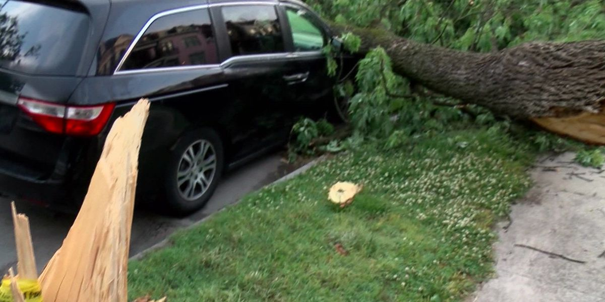 Tree service companies: preps for storms, don't wait for disaster