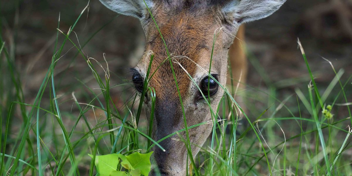 28 deer test positive for chronic wasting disease in Virginia