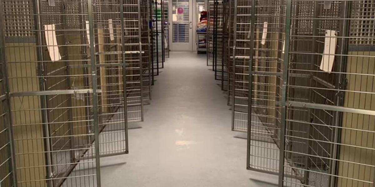 RACC looking to help overwhelmed shelters across country by bringing animals back to Richmond