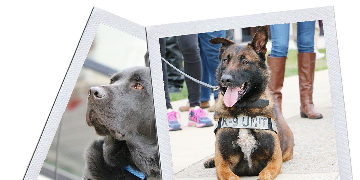 K-9 Veterans Day celebration honors service dogs