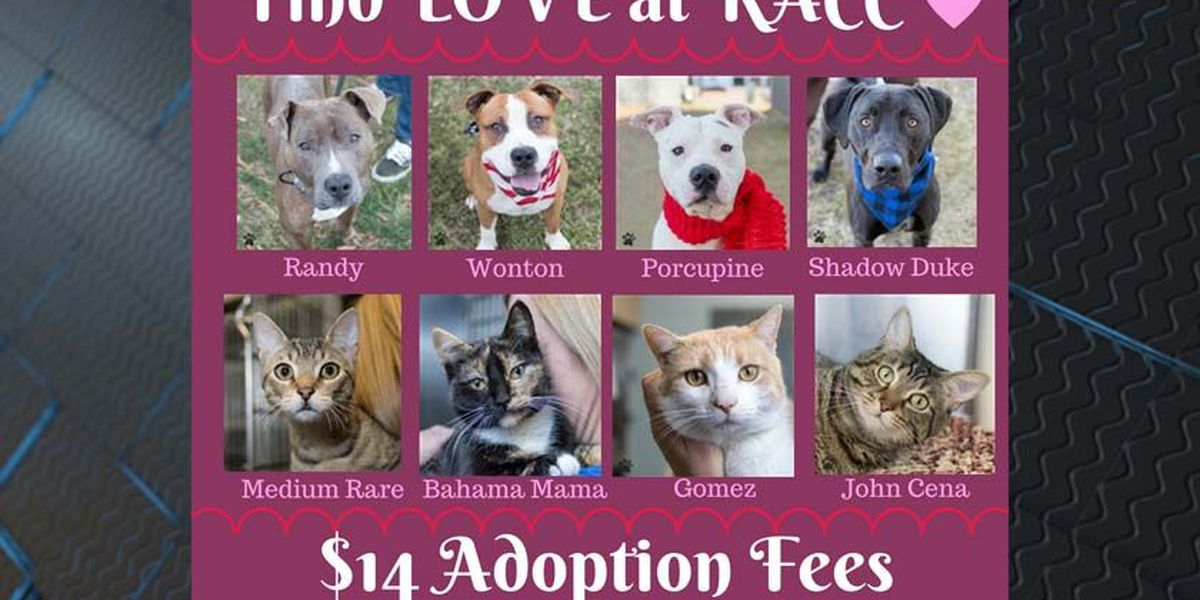RACC offering $14 pet adoption special