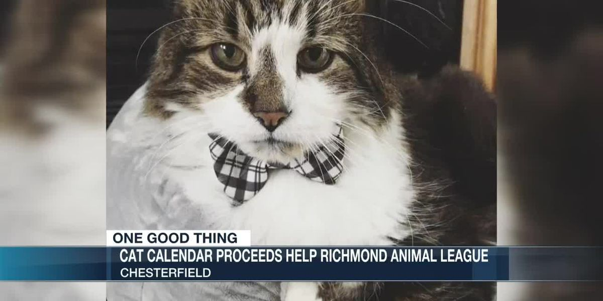 Money made from calendar of 16-year-old cat going to RAL