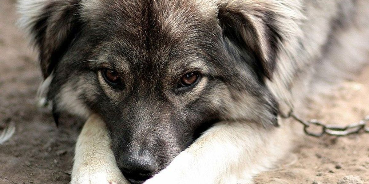 Petition calls for law to require dogs be brought in during severe weather