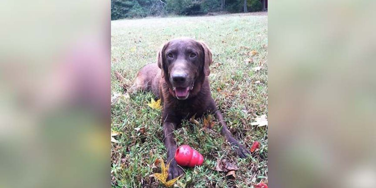 Chesterfield police say goodbye to retired canine