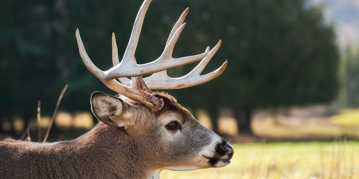 Va. Department of Game and Inland Fisheries holds mandatory testing for CWD