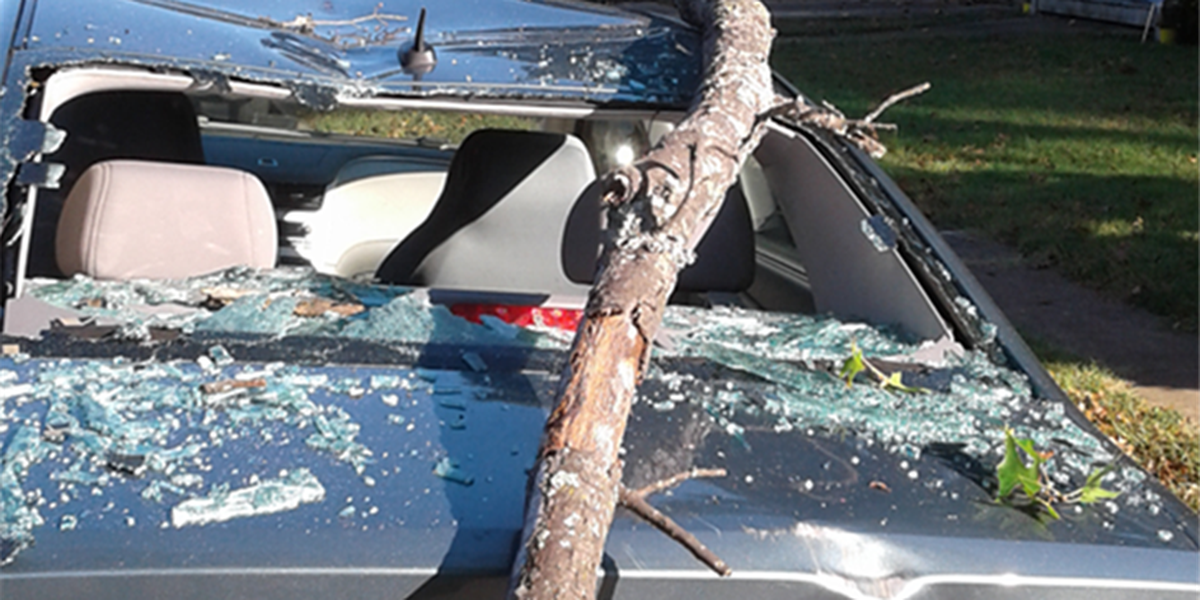 After multiple calls and totaled car, dead tree removed from woman's yard