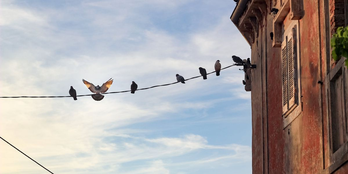 Florida man killed after using metal pole to get pigeon off power line, deputies say