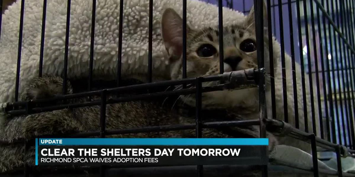 Clear the Shelters Day Saturday