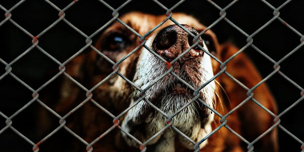 Arkansas shelter: Dogs injured after break-in for dogfight