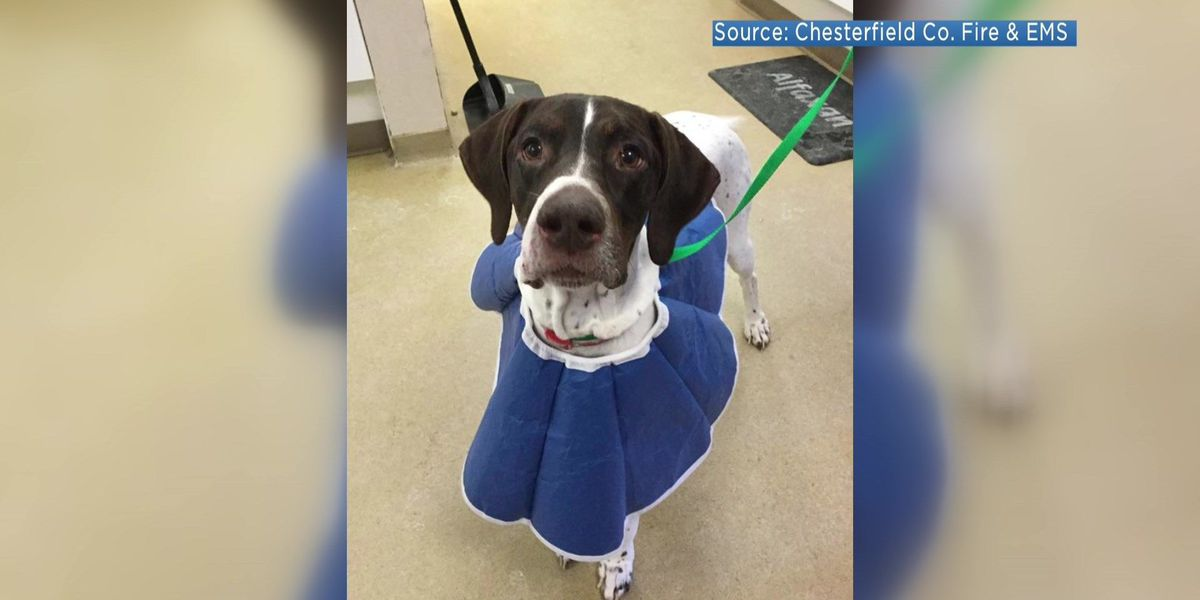 Dog rescued after falling through icy pond