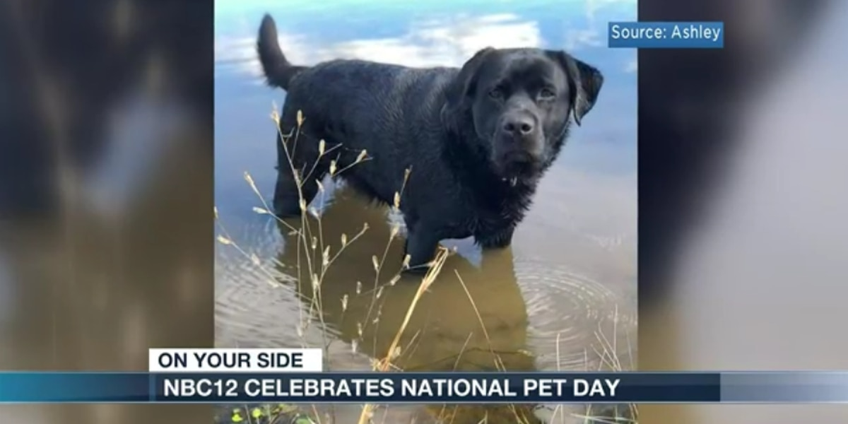 NBC12 celebrates National Pet Day
