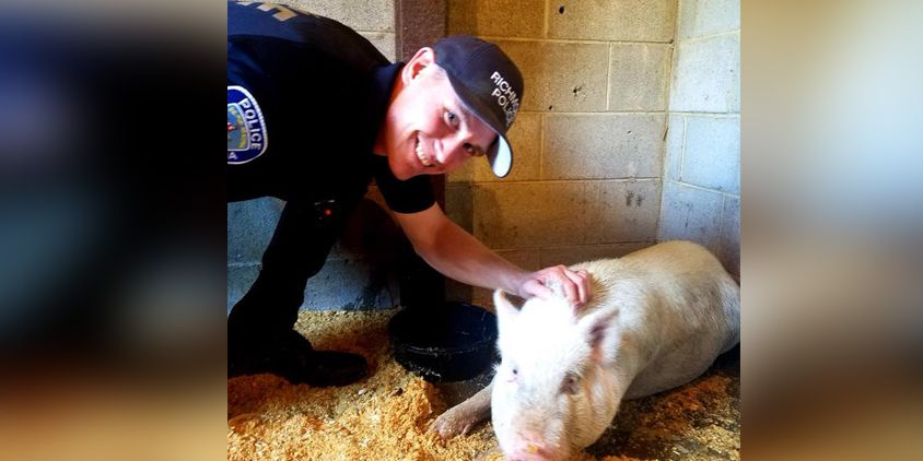 Missing a pig? One was found in Richmond's Northside