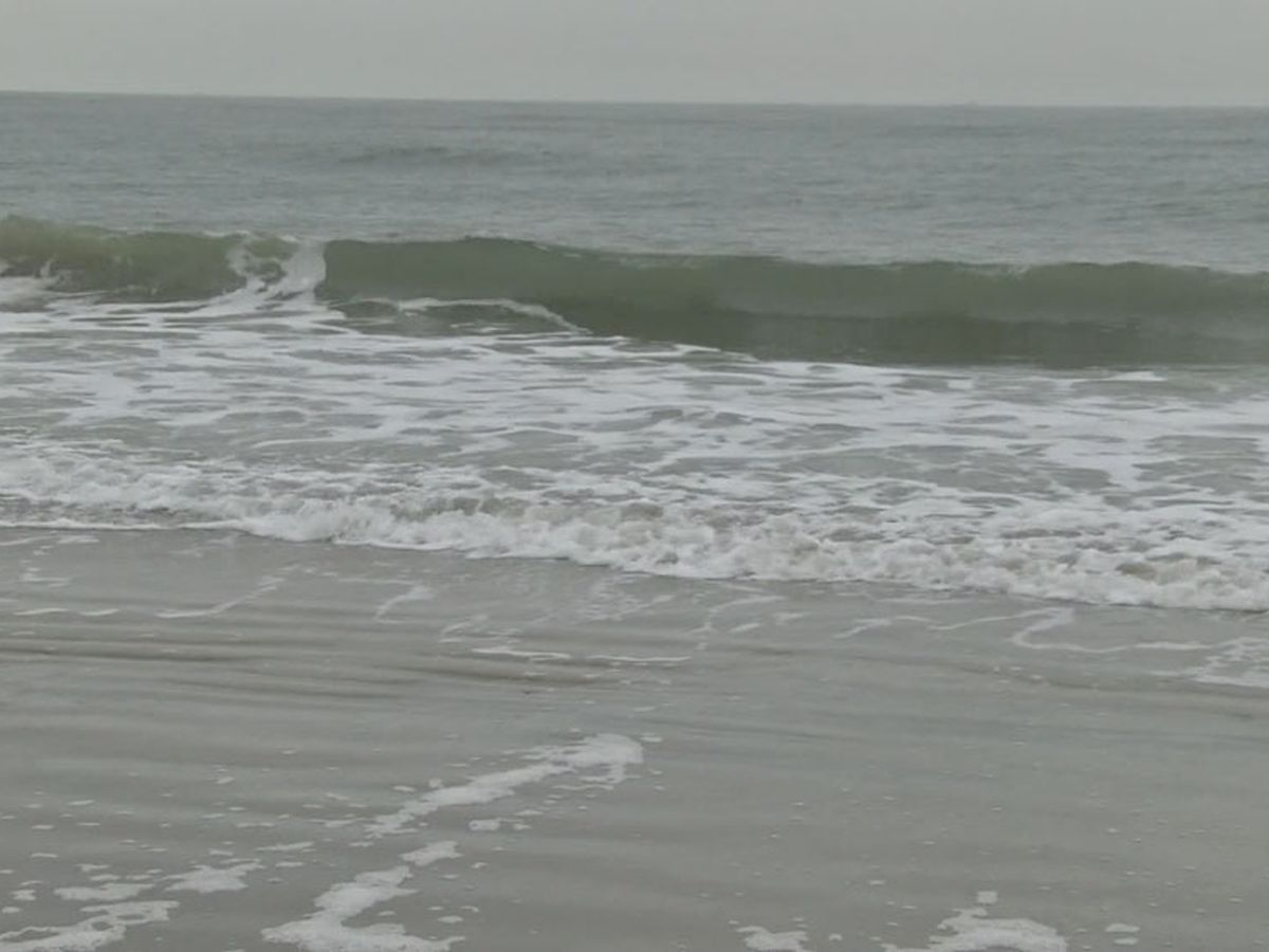 Beach officials urge caution after Portuguese man o' war discovered on Hilton Head beach