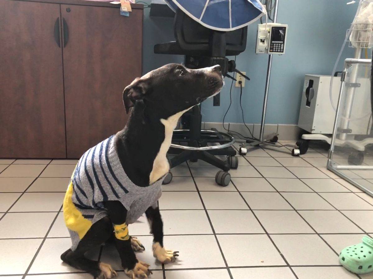 Dog recovering after being found starved, abandoned in Richmond dumpster
