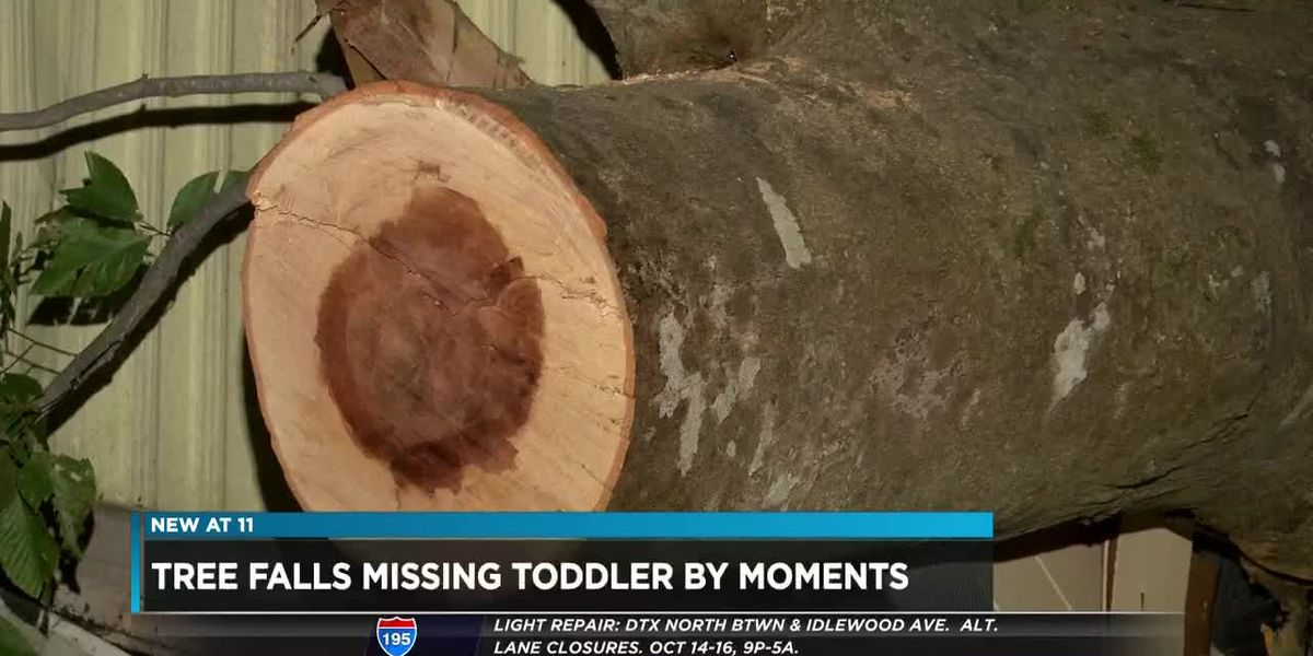 Tree falls where toddler had been moments before