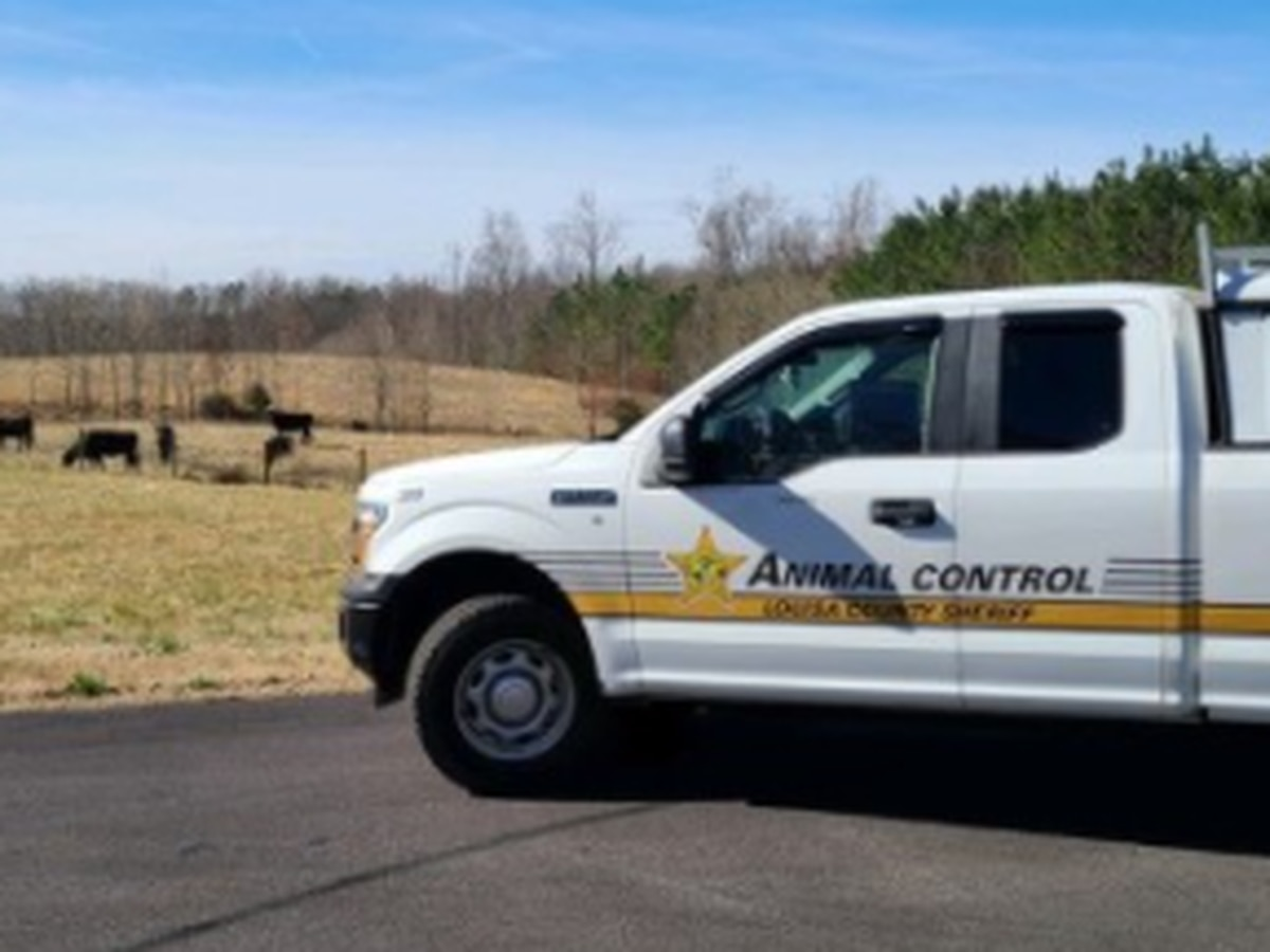 Suspect sought after cat shot with pellet gun in Louisa County