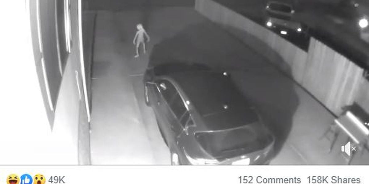 Security camera captures mysterious creature: 'What the heck?'