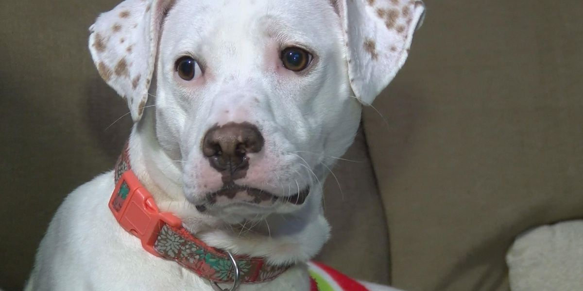 Couple seeking answers after dog escapes daycare