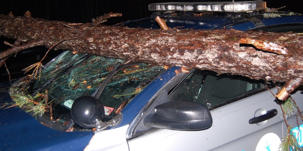 Virginia State Trooper vehicle hit by falling tree