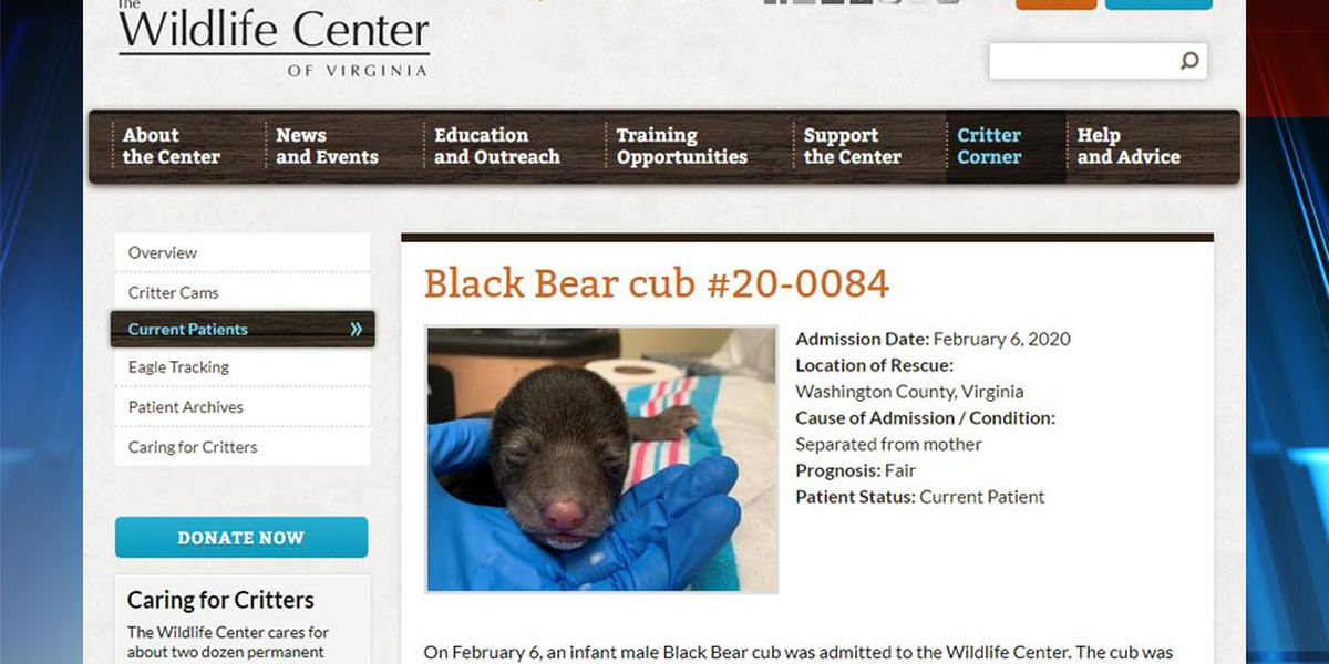 Wildlife Center of Virginia taking care of another bear cub