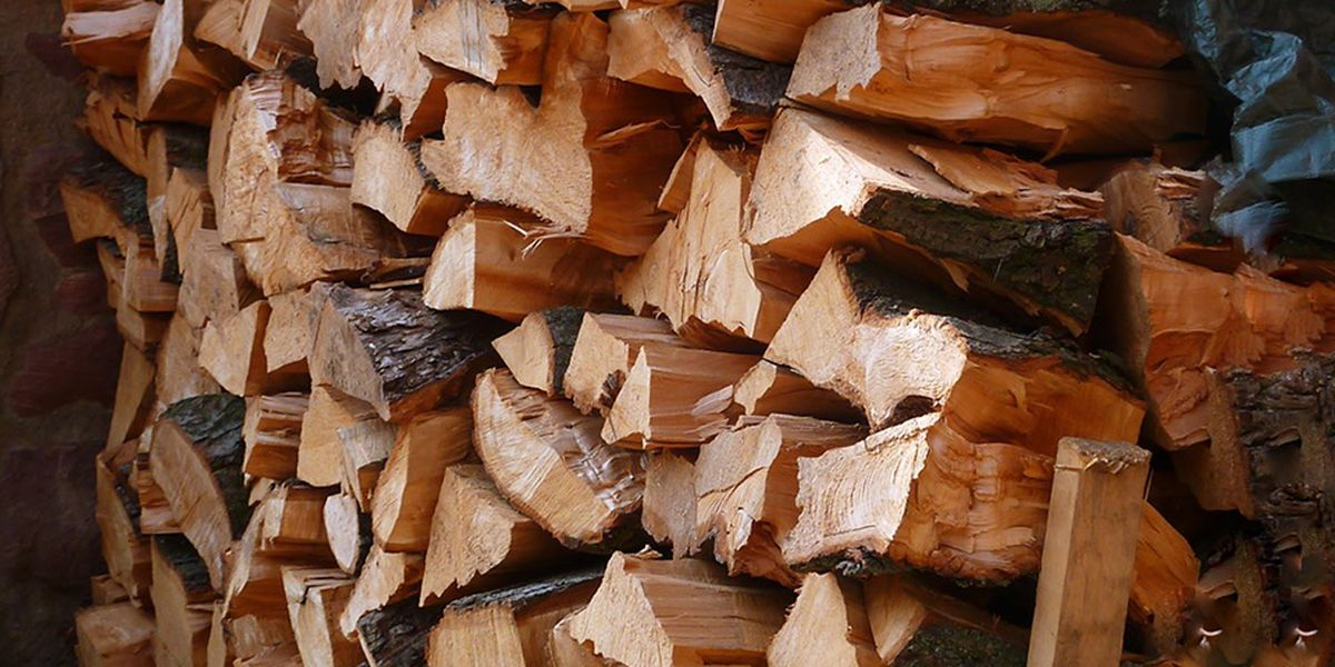 'Burn where you buy': Dept. of Forestry warns against transporting firewood