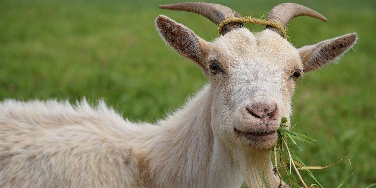 Petition claims victory in Radford fraternity goat case
