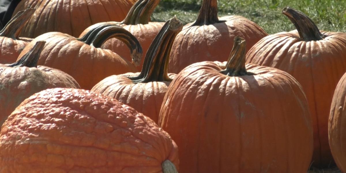 It's Virginia Pumpkin Month: Here's where to find locally-grown gourds