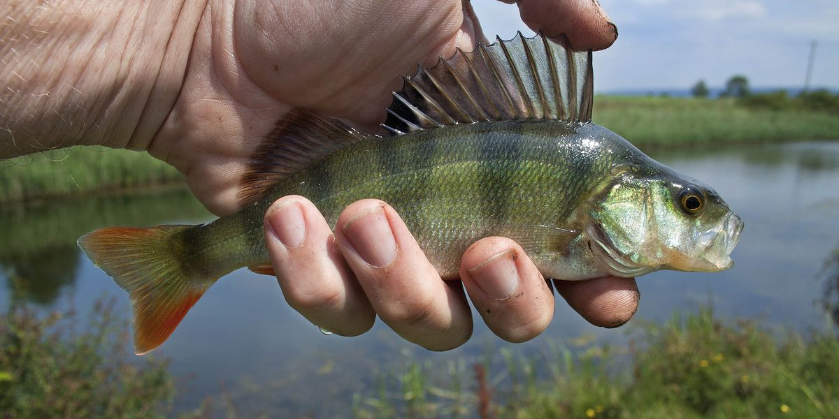 Free Fishing Days Scheduled For June 5 7