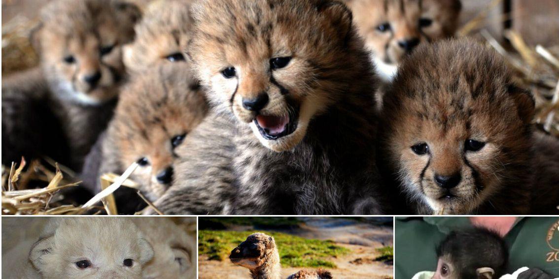Metro Richmond Zoo named best zoo in Virginia