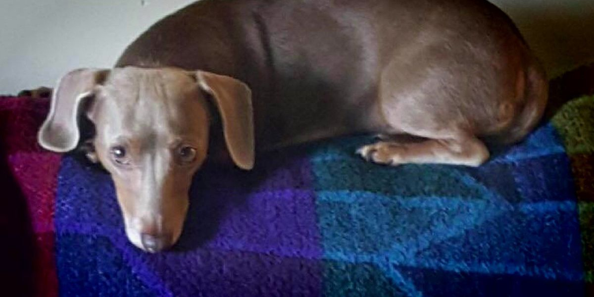 Acts of Kindness: Pet detectives searching for 'Layla' after family flees hurricane