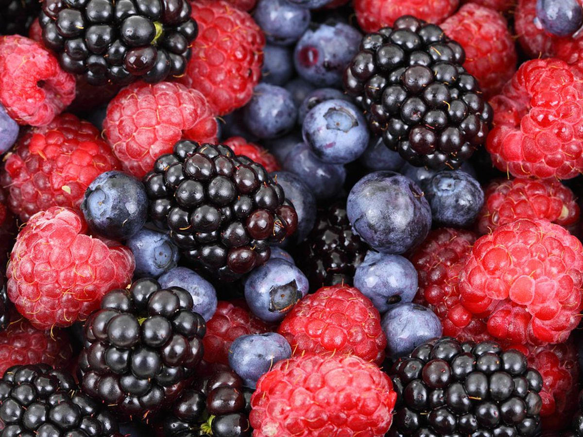 Virginia is ideal for berry-growing, horticulturists say