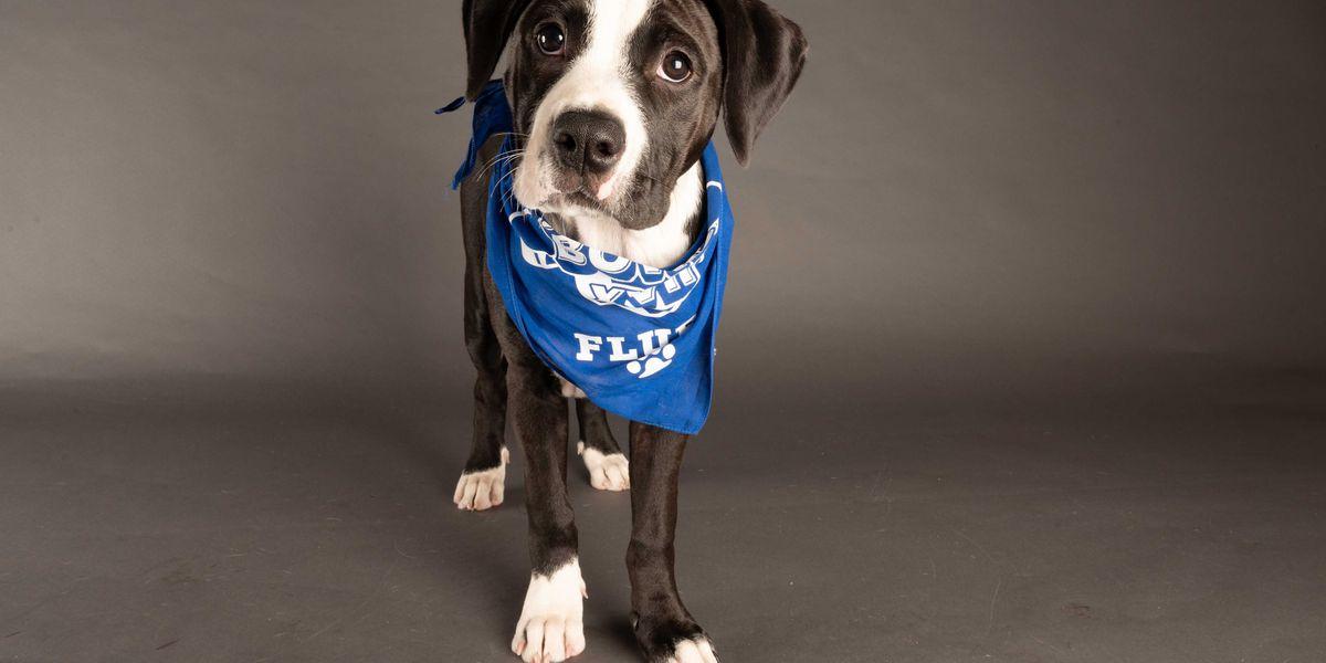 Mechanicsville dog set to debut in 2021 Puppy Bowl