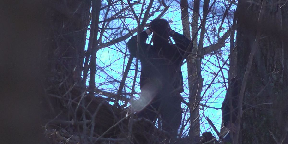 Tree sitters continue pipeline protest, as law enforcement officers visit site