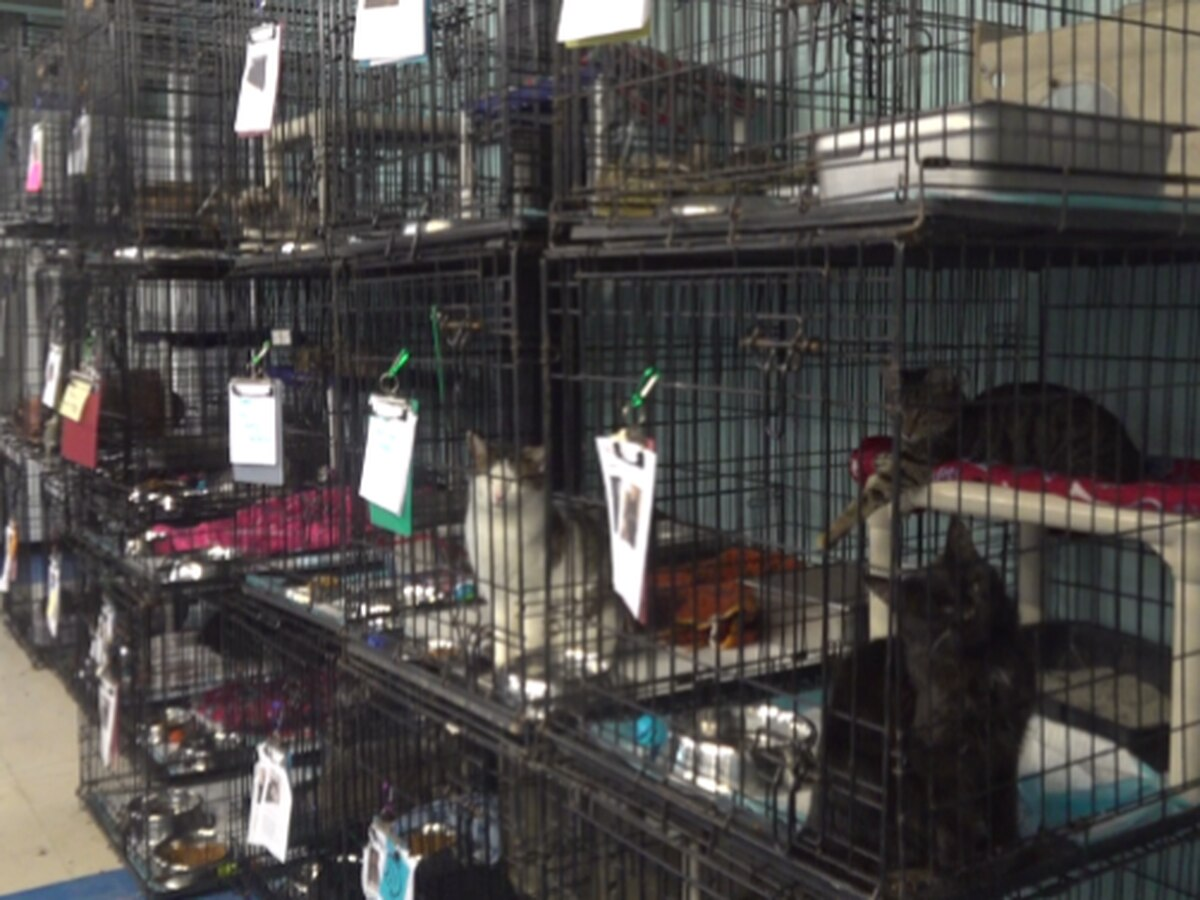 Shelter takes in 79 cats after hoarding case in southwest Va.