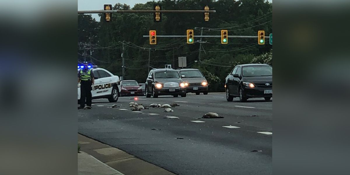More than a dozen geese hit, killed in Henrico
