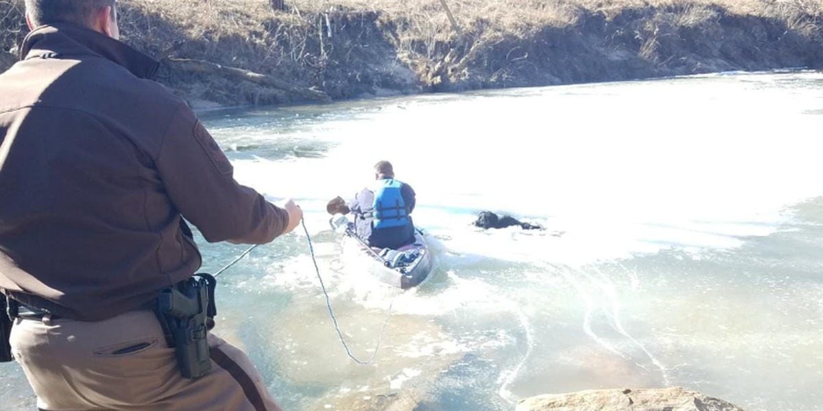 Dog rescued by police after falling through frozen pond