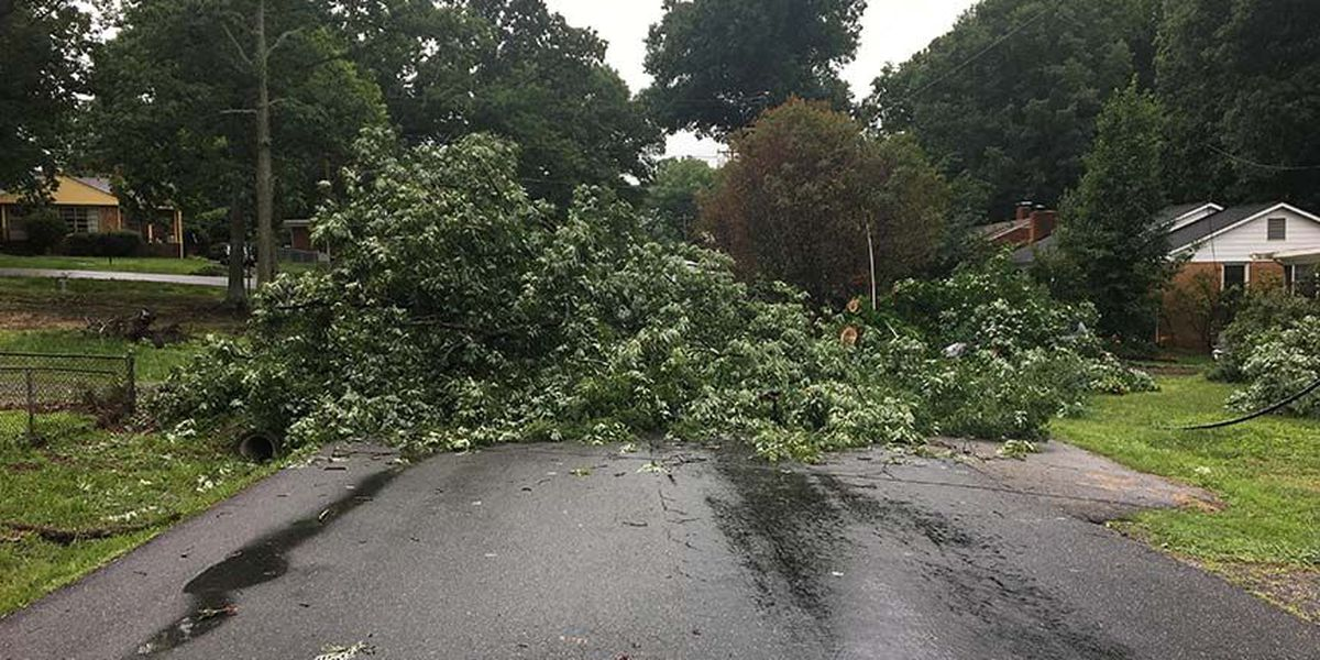 Homeowner wants county to remove fallen tree blocking driveway