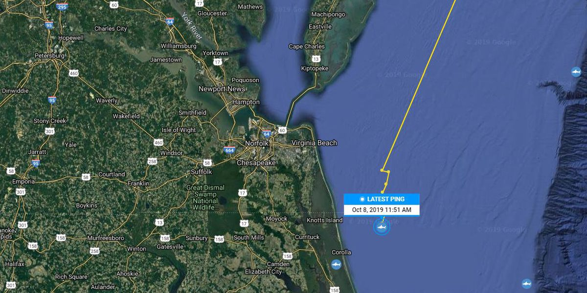 Recently tagged 2,000-pound shark located off Outer Banks