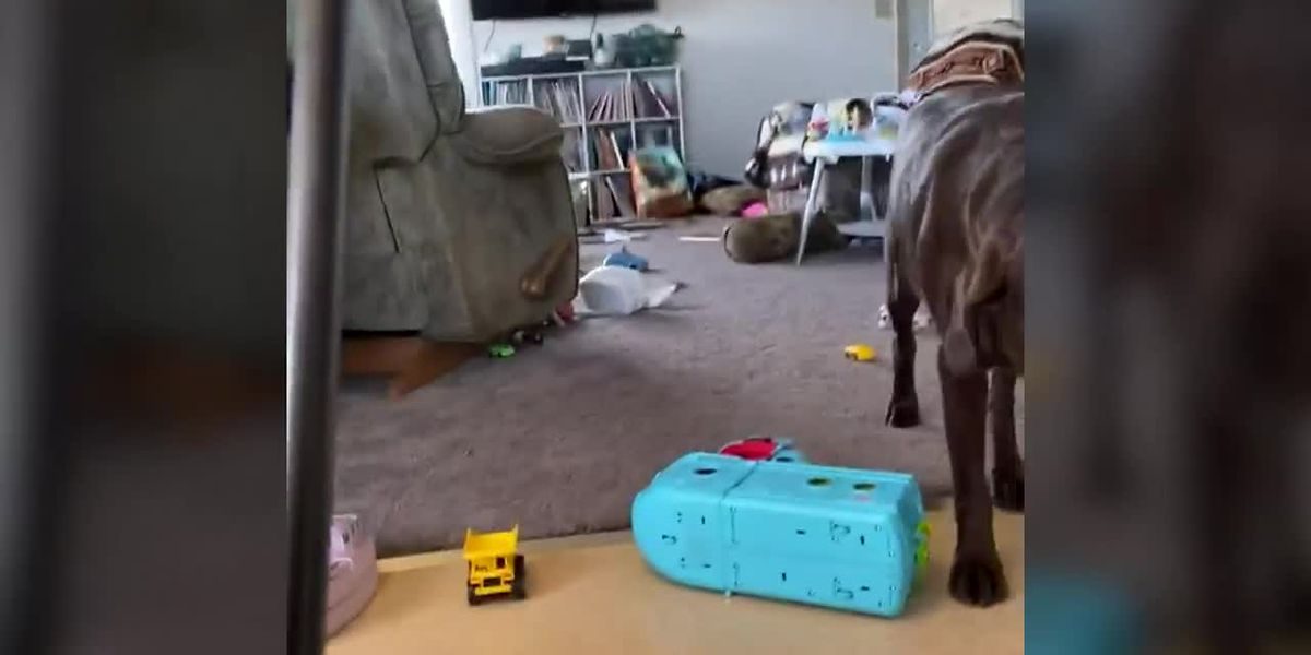 RAW: Mom, kids, dogs hide under table during earthquake in Alaska
