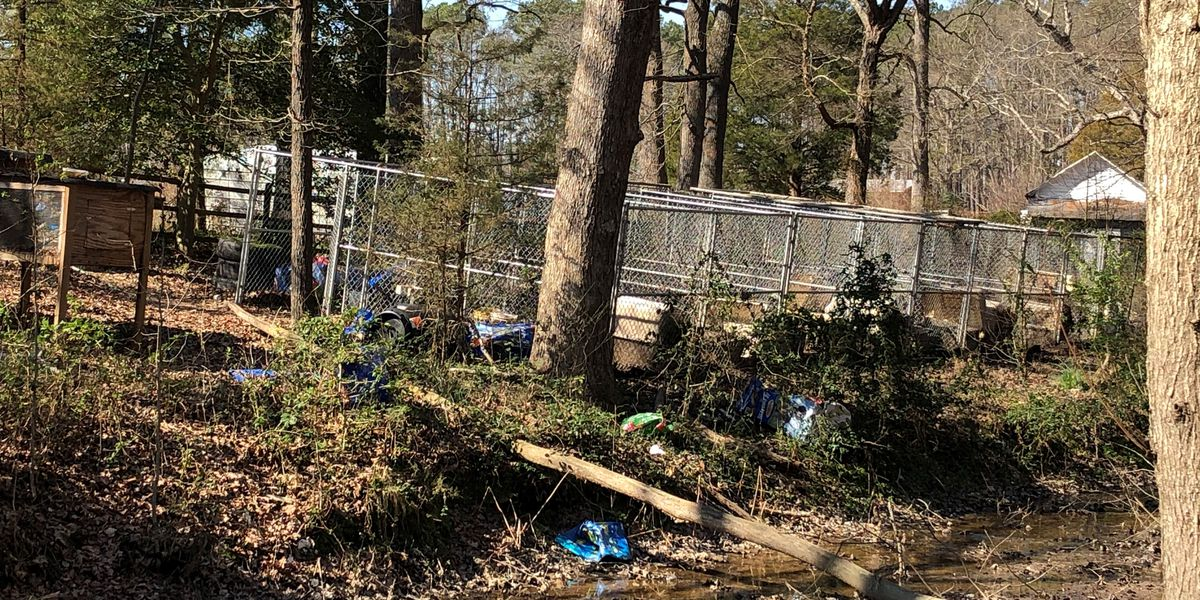 Man charged with animal cruelty after 21 dogs found dead, 1 rescued in Dinwiddie