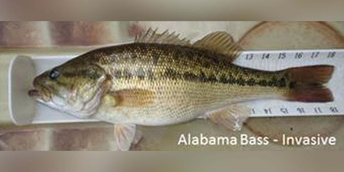 DGIF: New invasive species of fish discovered in Virginia's lakes