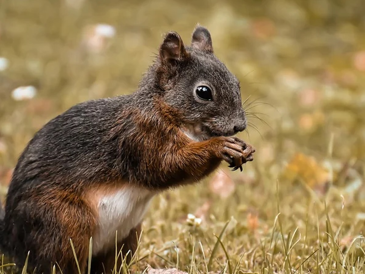 Selected wildlife management areas, private lands opens for squirrel season