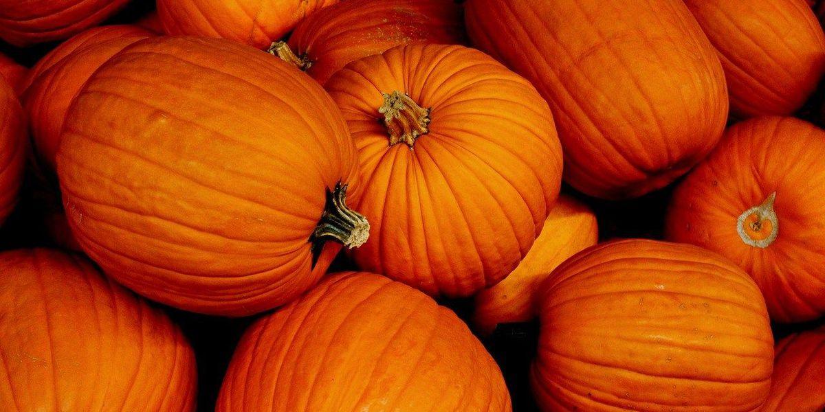 Colleen Quigley's Pumpkin Bread Recipe