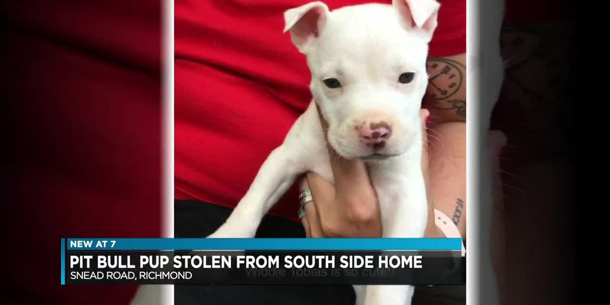 Pit bull puppy stolen from Richmond home
