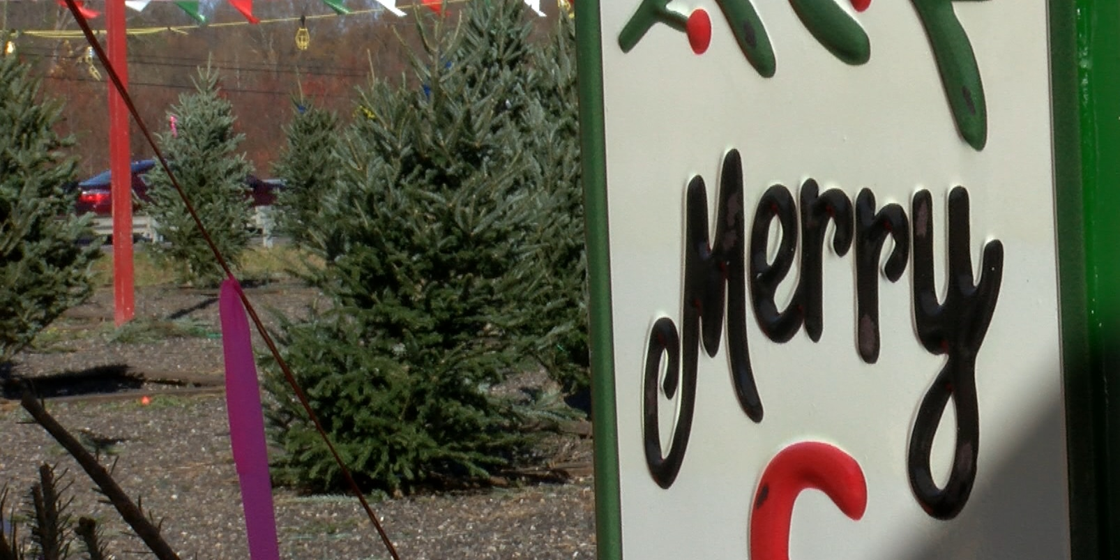 'I've never seen anything like it': Christmas trees selling out early during COVID-19 pandemic