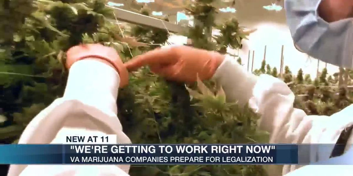Gearing up to sell marijuana in Virginia