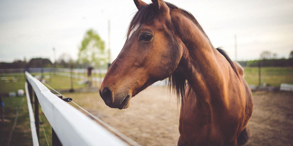 Horse tests positive for Equine Herpesvirus-1 in Central Va.