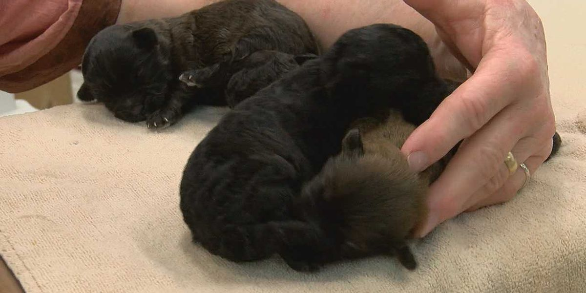 125 dogs living in filth rescued from Ohio property